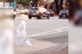 塑料袋走着过马路